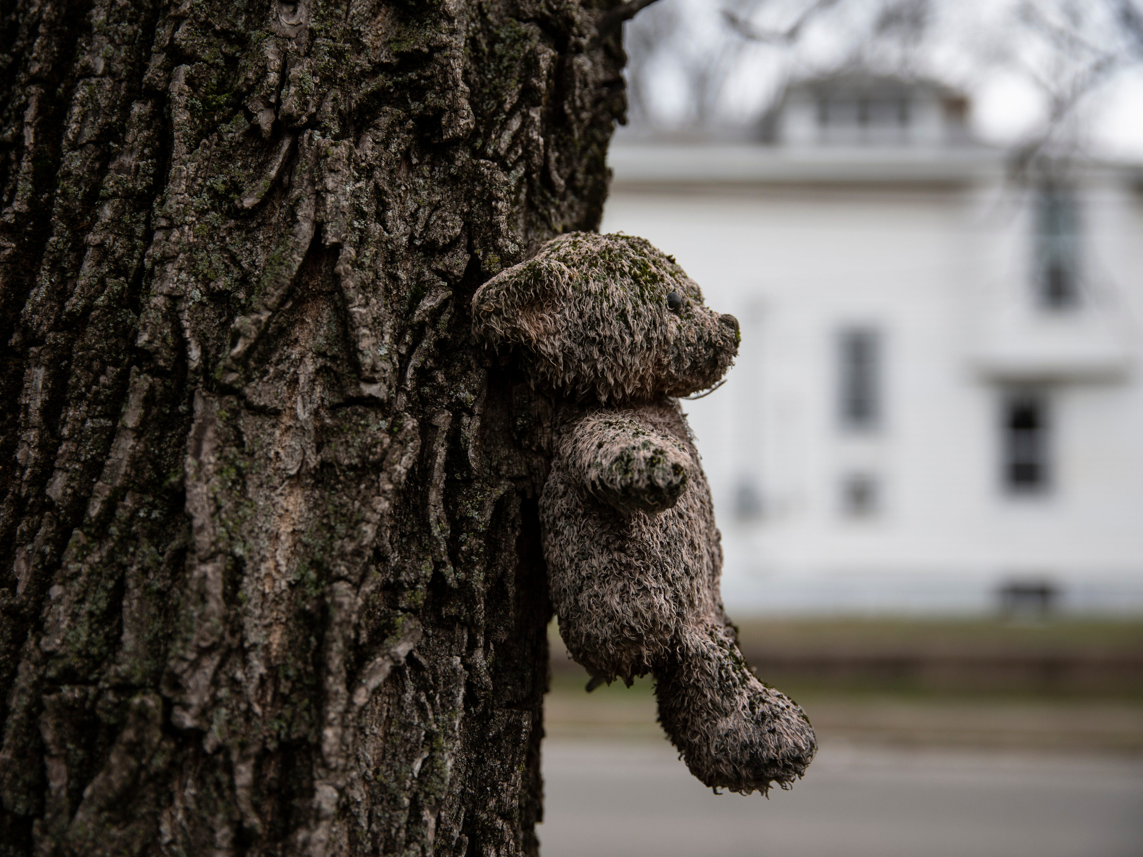 One of two bears placed on a tree at Cypress and Wilson streets following the 2008 deaths of Marc, Jemar, Demar Claybrooks and Aaron Shields, all killed in a car accident. The boys accepted a ride with Herbert Lee in a stolen a car. Lee crashed the car into a tree during a police chase, killing the four youths. March 21, 2019