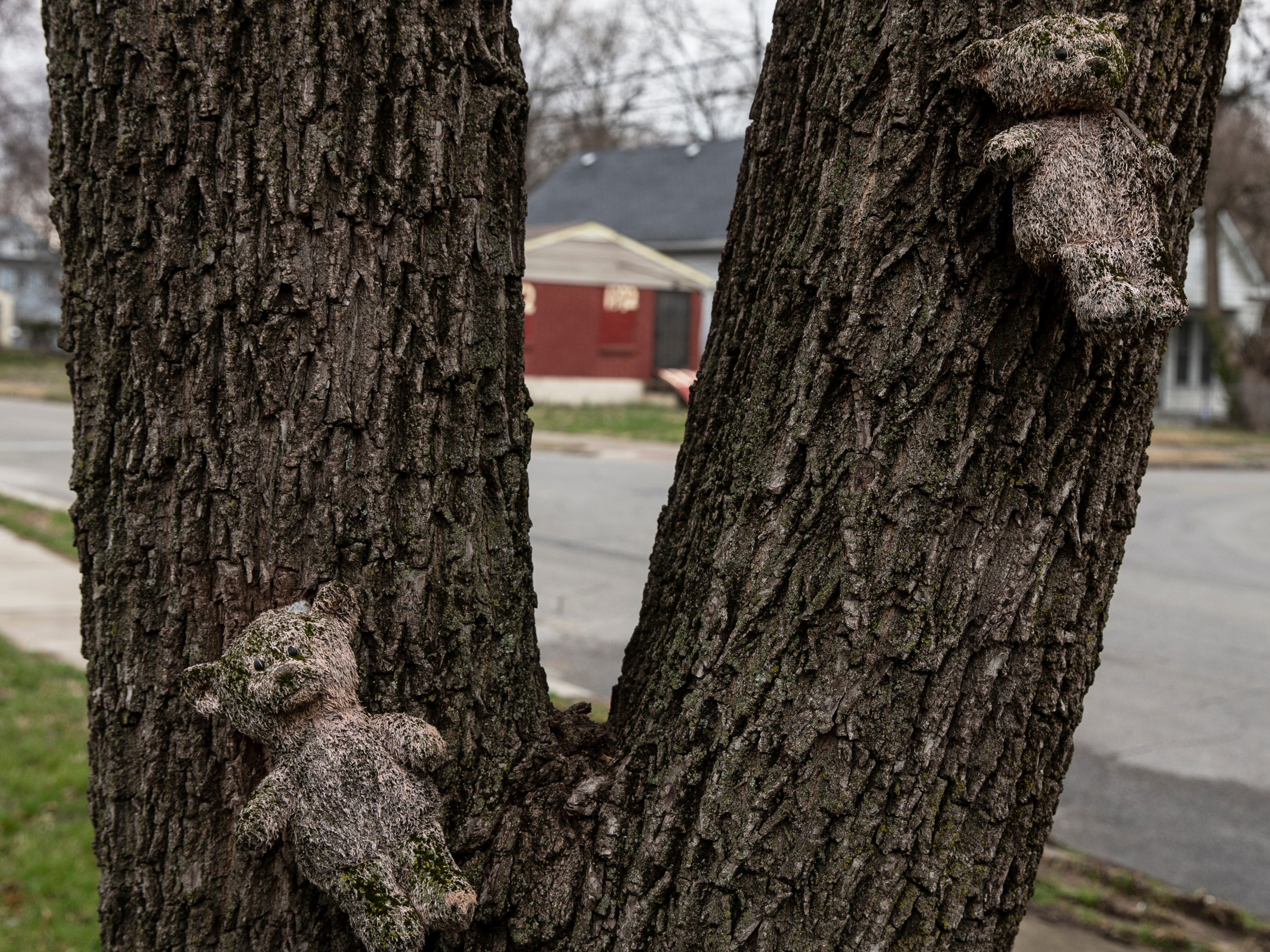 Two bears placed on a tree on Cypress and Wilson Streets following the 2008 deaths of Marc, Jemar, Demar Claybrooks and Aaron Shields, all killed in a car accident. The boys accepted a ride with Herbert Lee in a stolen a car. Lee crashed the car into a tree during a police chase, killing the four youths. March 21, 2019
