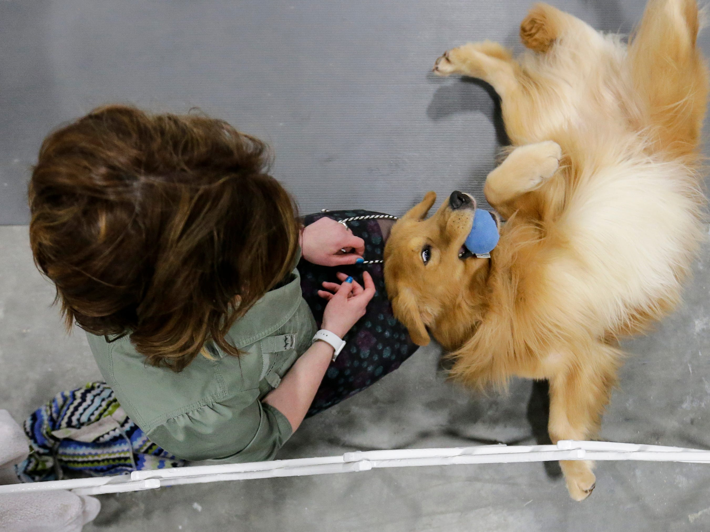 Jennifer Hoffman, of Elkhart Lake, plays with her golden retriever Nico while waiting for the judge of the sporting group show during the Northeast Wisconsin Dog Show Classic at the Manitowoc County Expo Center Thursday, March 28, 2019, in Manitowoc, Wis. Joshua Clark/USA TODAY NETWORK-Wisconsin