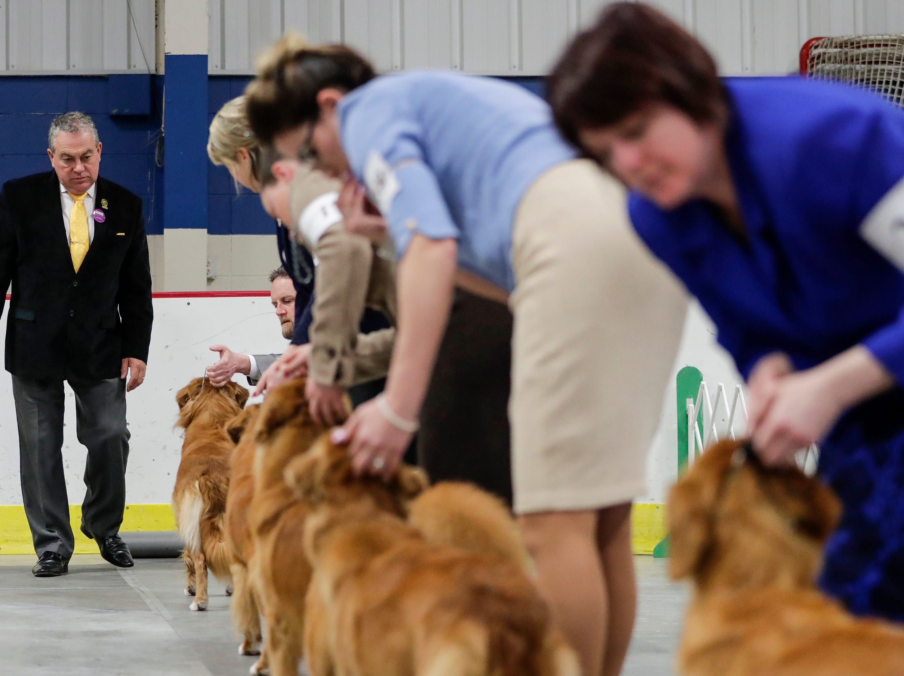 Judge Christopher T. Moore walks down a line of Nova Scotia duck tolling retrievers during the Northeast Wisconsin Dog Show Classic at the Manitowoc County Expo Center Thursday, March 28, 2019, in Manitowoc, Wis. Joshua Clark/USA TODAY NETWORK-Wisconsin