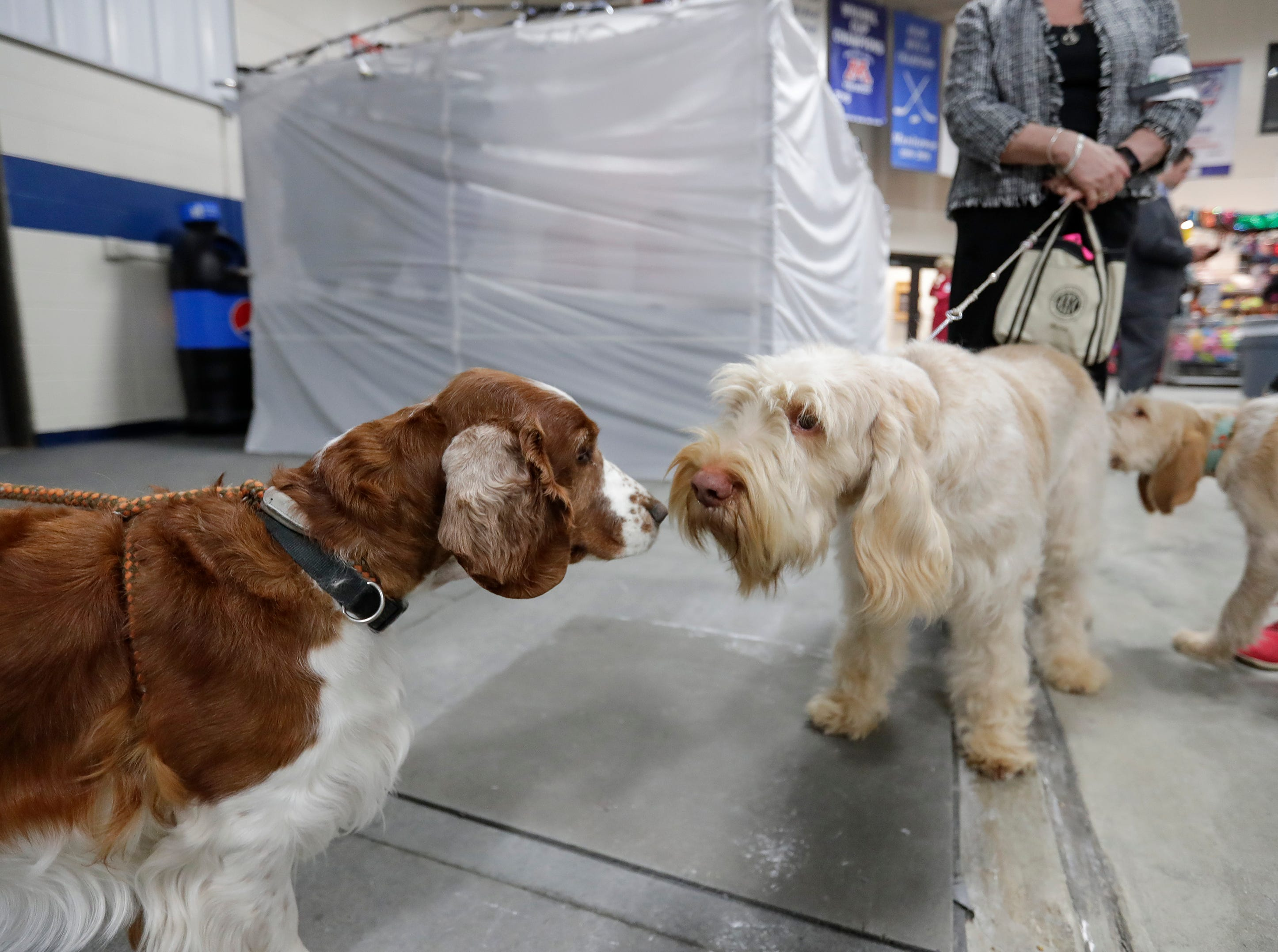Dogs sniff check each other out during the Northeast Wisconsin Dog Show Classic at the Manitowoc County Expo Center Thursday, March 28, 2019, in Manitowoc, Wis. Joshua Clark/USA TODAY NETWORK-Wisconsin