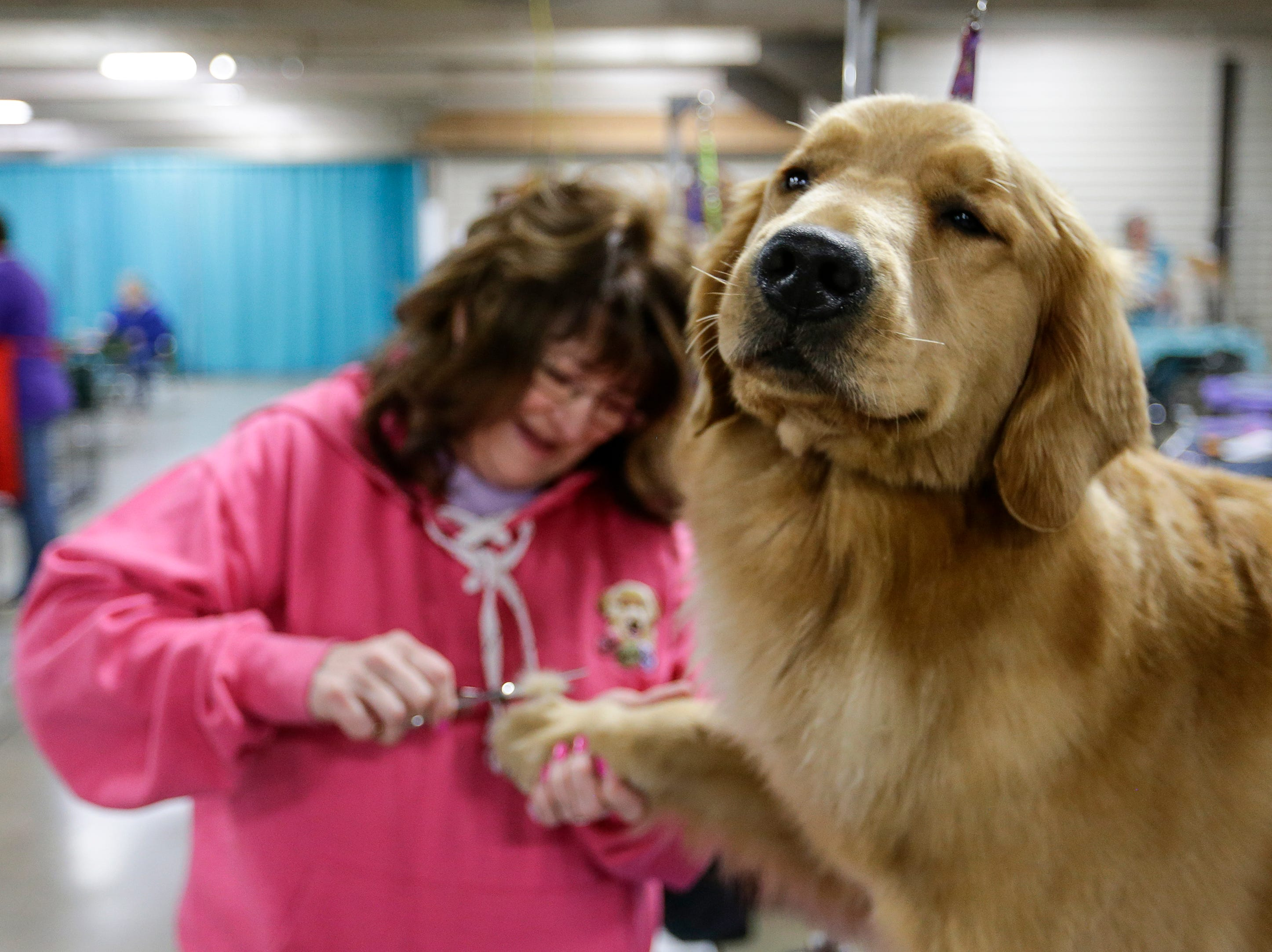 Kathy Siegle, of Kettle River, Minn., trims the fur on her golden retriever Olivia during the Northeast Wisconsin Dog Show Classic at the Manitowoc County Expo Center Thursday, March 28, 2019, in Manitowoc, Wis. The show, put on by the Manitowoc County and Packerland Kennel Clubs, runs through Sunday and is expected to draw nearly 4,000 dogs this weekend. Joshua Clark/USA TODAY NETWORK-Wisconsin