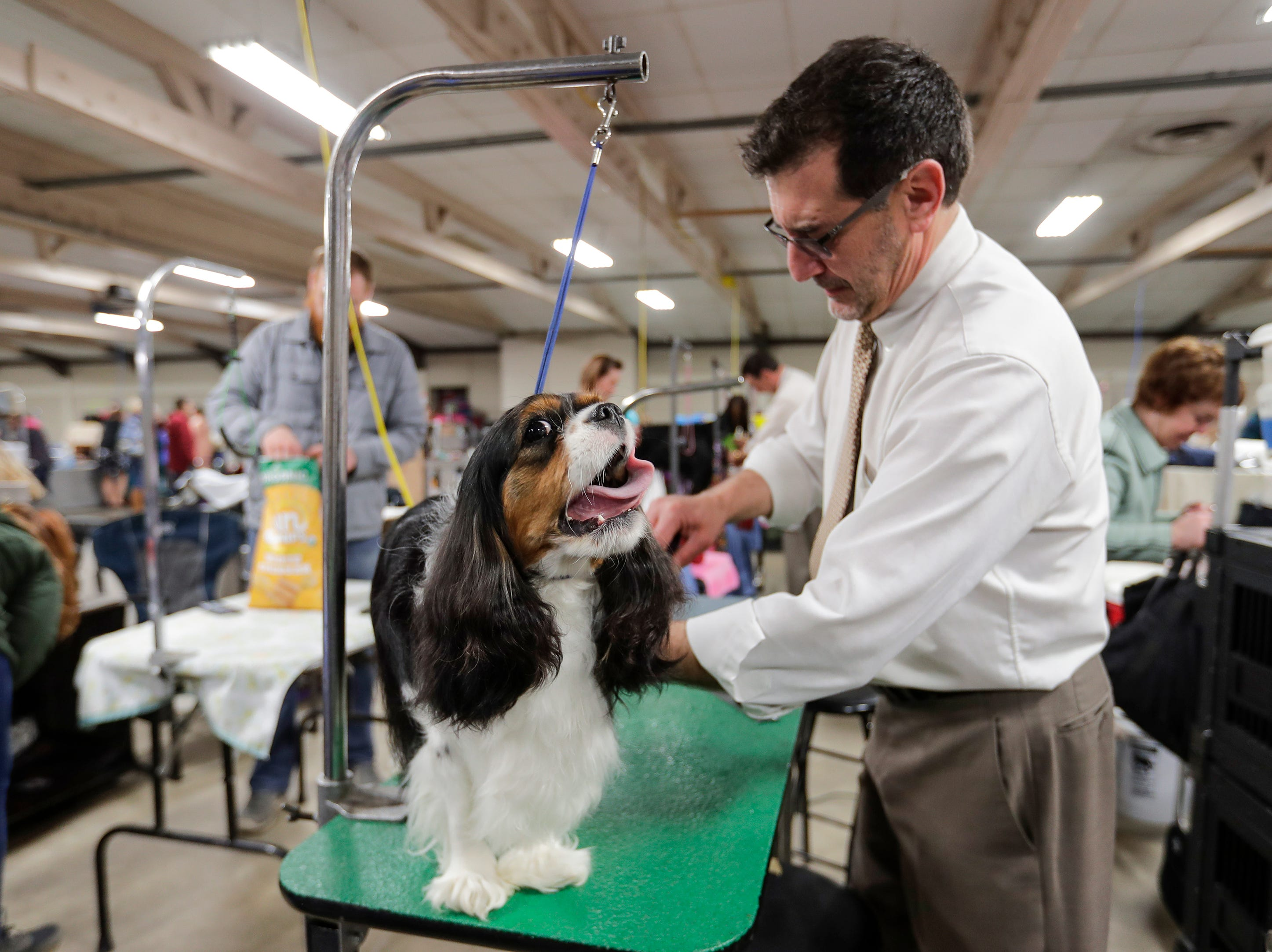 Carlos Puig, of Round Lake, Ill., grooms a cavalier king charles spaniel during the Northeast Wisconsin Dog Show Classic at the Manitowoc County Expo Center Thursday, March 28, 2019, in Manitowoc, Wis. Joshua Clark/USA TODAY NETWORK-Wisconsin