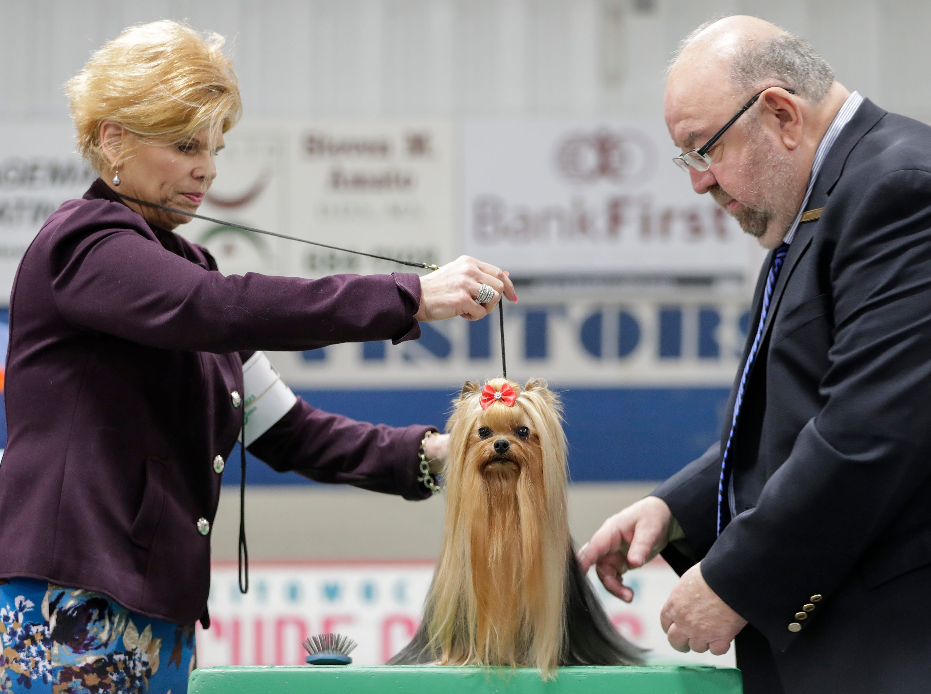 Judge Raymond V. Filburn Jr., right, looks over a Yorkshire terrier during the Northeast Wisconsin Dog Show Classic at the Manitowoc County Expo Center Thursday, March 28, 2019, in Manitowoc, Wis. Joshua Clark/USA TODAY NETWORK-Wisconsin