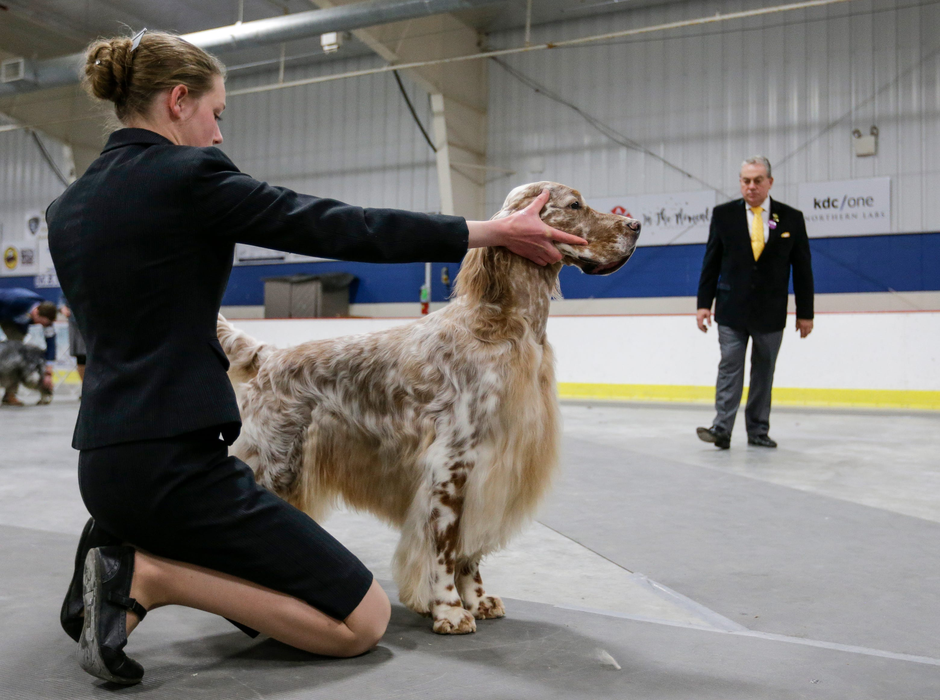 Abigail Anderson, of Bailey, Colo., shows her English setter Austin to Judge Christopher T. Moore during the Northeast Wisconsin Dog Show Classic at the Manitowoc County Expo Center Thursday, March 28, 2019, in Manitowoc, Wis. Joshua Clark/USA TODAY NETWORK-Wisconsin