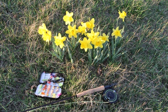A fly rod and box of flies was photographed in late March 2018 next to a patch of daffodils on a grassy bank along the Menomonee River in Milwaukee County.