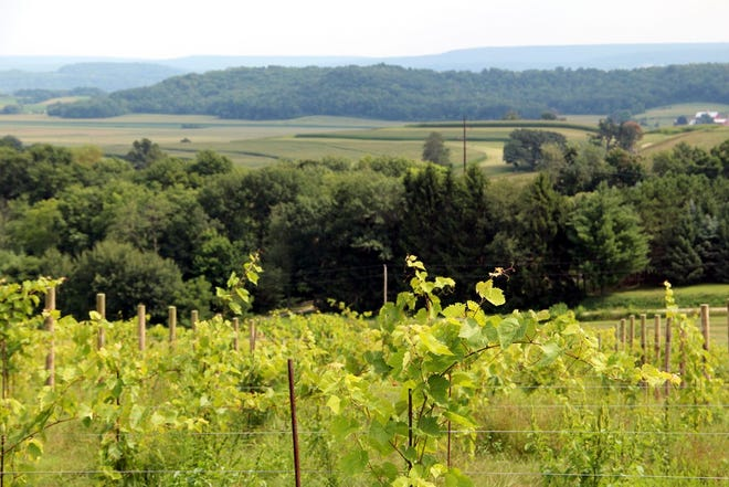 Baraboo Bluff Winery's tasting room and outdoor seating take advantage of pleasing views of the vineyards, bluffs and Baraboo River valley.