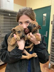 Two puppies were found in a trash container by recycling employees on Wednesday afternoon.