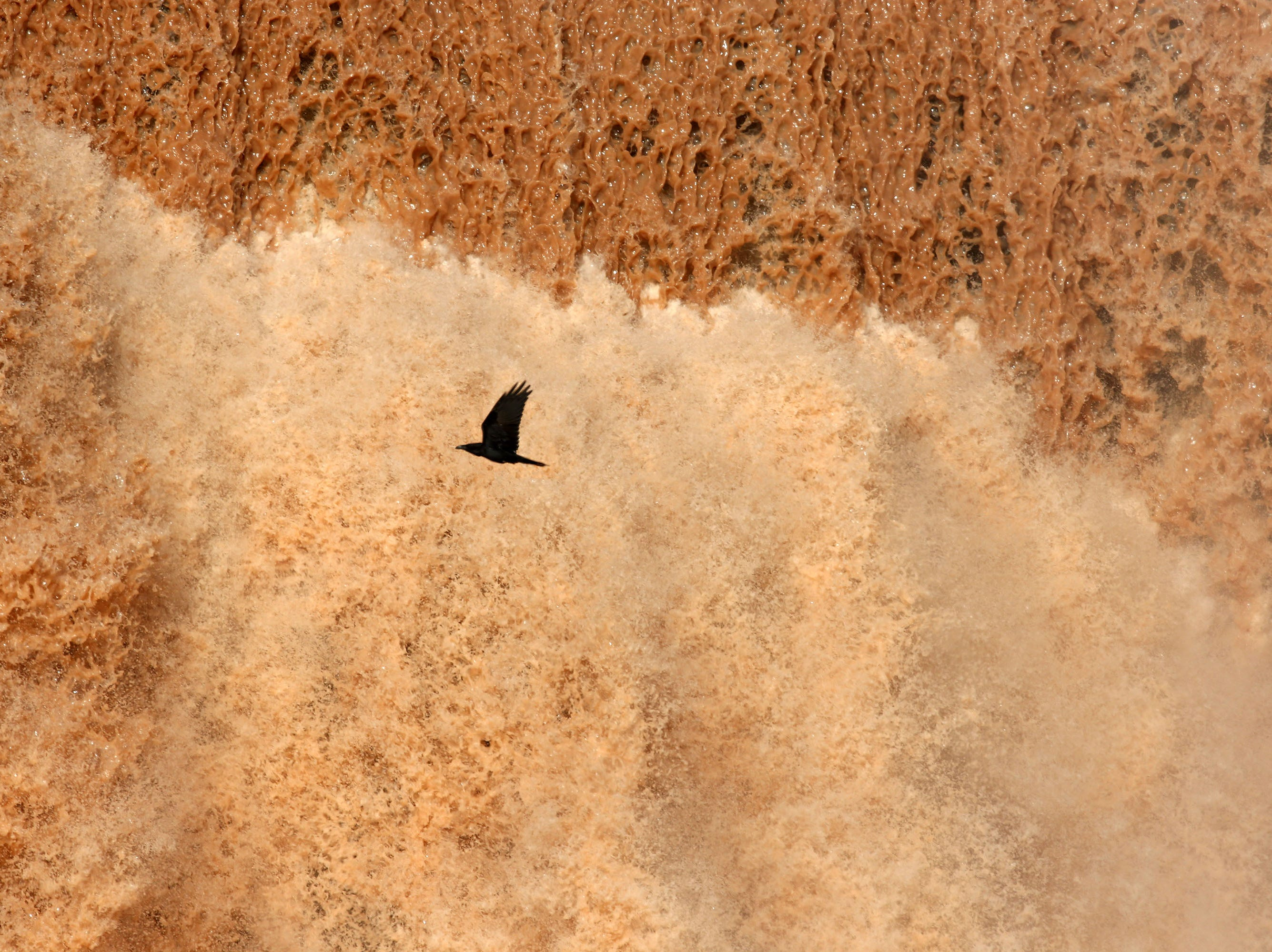 A crow flies past Grand Falls in the Painted Desert on the Navajo Nation on March 28, 2019, near Leupp, Arizona. Melted snow and rain travels down the Little Colorado River to the 185-foot fall a.k.a. Chocolate Falls. Grand Falls is 18 feet taller than Niagara Falls.