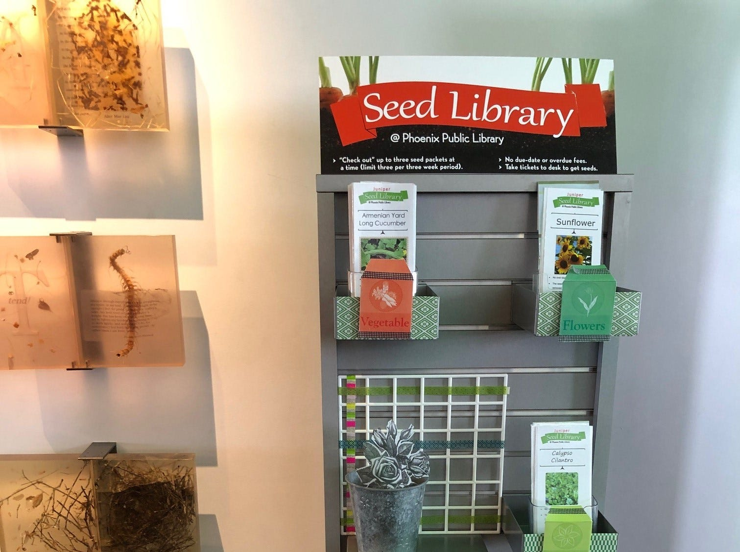 The Seed Library at Phoenix's Juniper Library in November 2018.