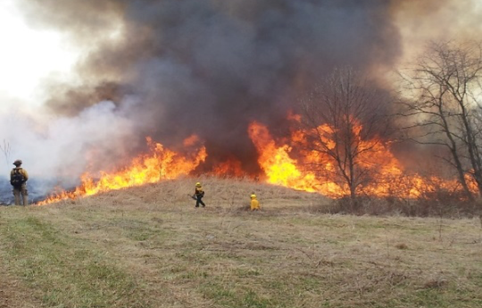 A look at a controlled burn.