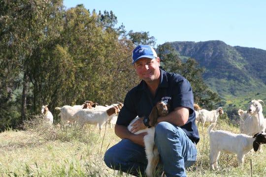 Scott Morris, of 805 Goats, with a kid as other goats graze near La Reina High School.