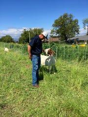 Scott Morris, of 805 Goats, as his goats graze near La Reina High School in Thousand Oaks. Morris is an unexpected entrepreneur.