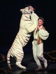 FILE -- Roy, of the world-renowned illusionists Siegfried & Roy, performs with a white tiger during their 15,000th live show Thursday night, Jan. 18, 1996, at The Mirage in Las Vegas. A tiger attacked magician Roy Horn of the duo ''Siegfried & Roy'' during a Friday night performance at The Mirage hotel-casino, authorities said.     Roy was attacked at the throat, said Clark County Fire spokesman Bob Leinbach. He was taken to University Medical Center; Leinbach did not know his condition. (AP Photo/Lennox McLendon) ORG XMIT: NY122