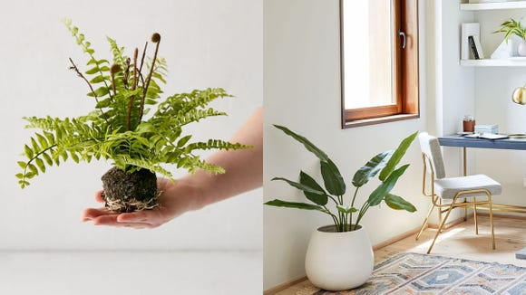 Serial plant killer? With these artificial plants and trees, no one ever has to know.