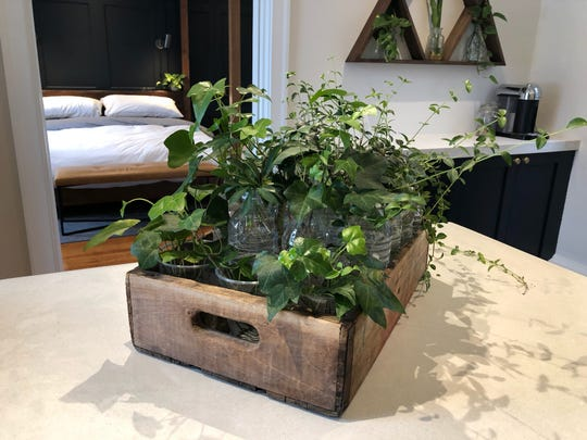Eric Hillegass' plant propagations provide color throughout the home he shares with husband Patrick Bartscherer. Plants will also be a big part of the couple's soon-to-open Collingswood business, Bespoke Home + Life.