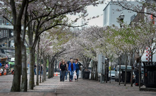 Pedestrians make their way through a row of cherry trees at Riverfront Park along First Avenue North on Saturday, March 30, 2019 in Nashville, Tenn. More than 20 of the trees are slated to be cut down to make room for a stage for the 2019 NFL draft coming to Nashville at the end of April.