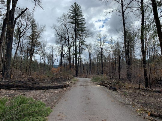 Damage on either side of the road from the boat launch to the main parking lot at North Santiam State Recreation Area photographed March 30, 2019.