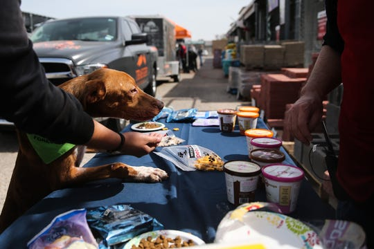 A shelter dog with Concho Valley PAWS tries to get more ice cream during the open house Saturday, March 30, 2019, at Westlake Ace Hardware.