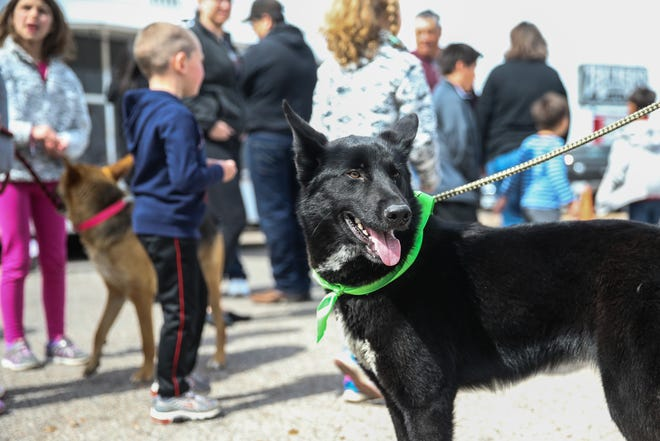 Concho Valley PAWS brought dogs to the ice cream social for dogs during the open house Saturday, March 30, 2019, at Westlake Ace Hardware.