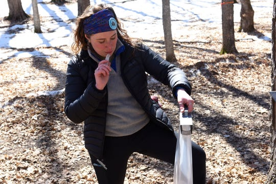 Jenna Stanze, 19, has a taste of frozen sap as she examines a maple sap collection bag Saturday, March 30 in Collegeville. Stanze, a sophomore at the College of St. Benedict & St. John's University, was the lead tapper at this year's Maple Syrup Festival.