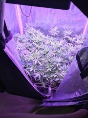 Marijuana bust on East Joy Lane