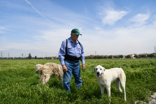 Californians are turning to an age-old solution to stop the next round of fires: goats to eat through the vegetation. Here, George Gonzales is with two of the dogs that protect the goats from predators