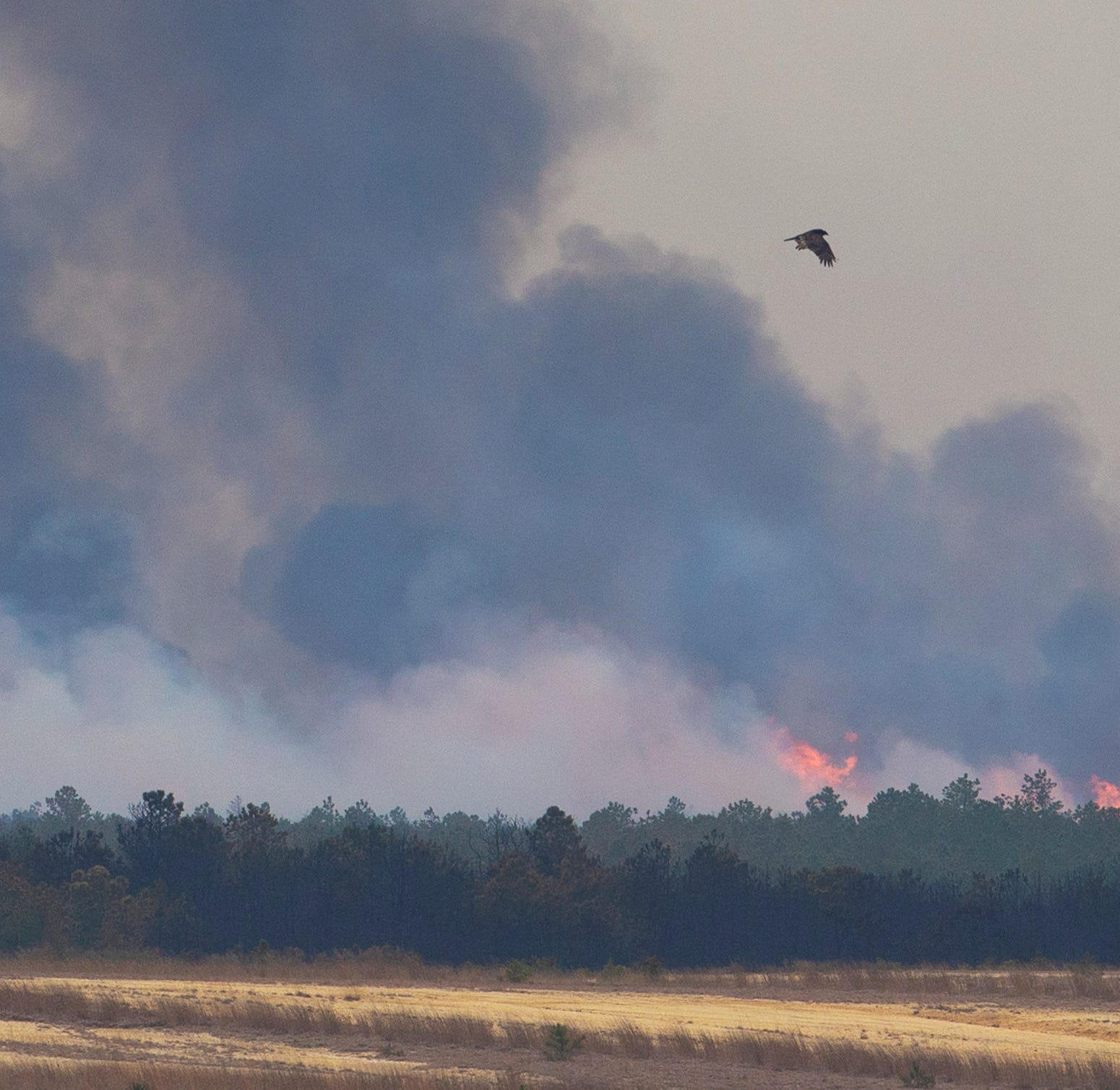 NJ forest fire update: 75% is contained; 10,000 acres still burning