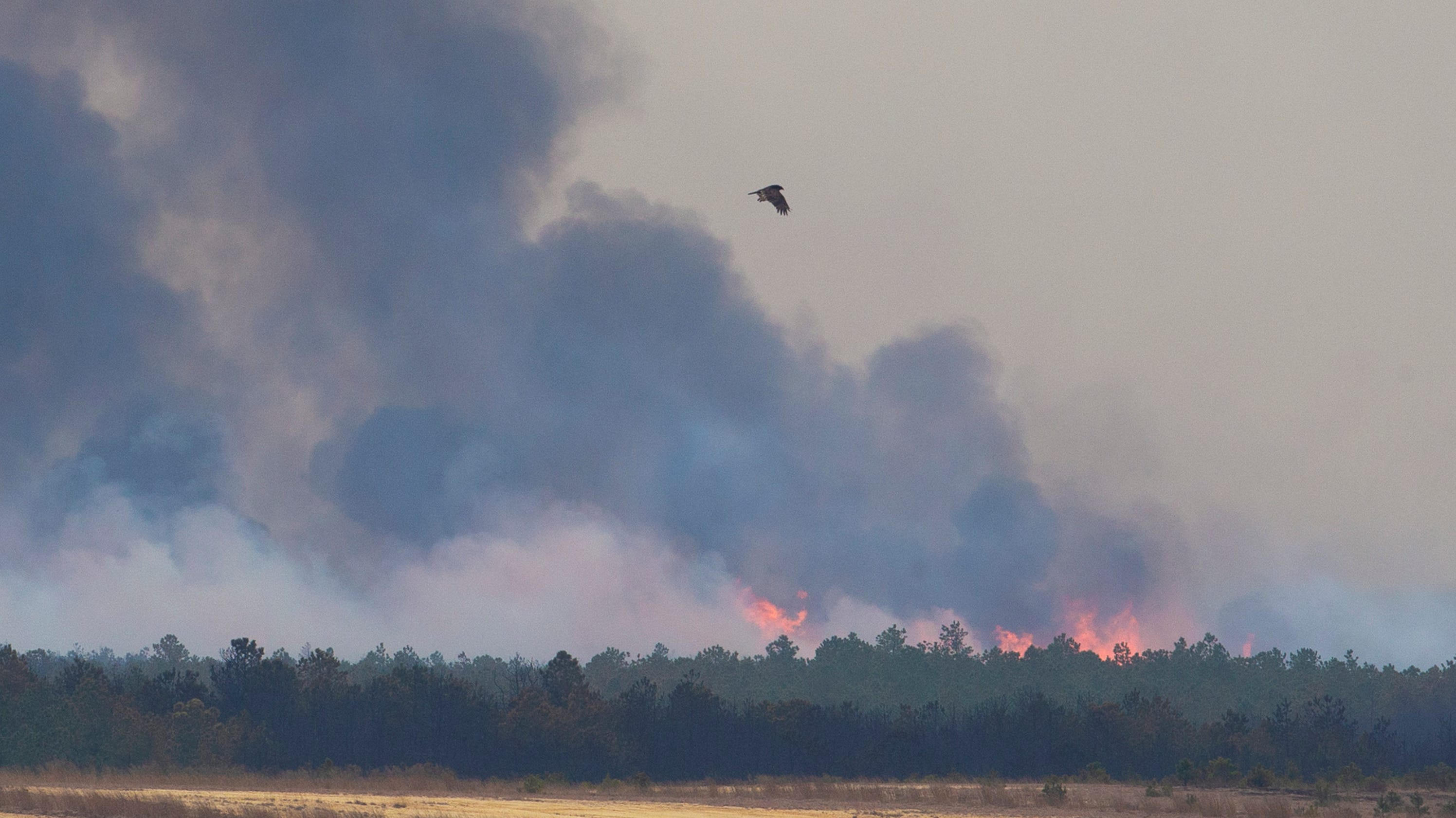 NJ forest fire: Route 72 in Barnegat still closed, 10,000