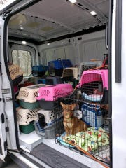 Chihuahua Rescue & Transport, a nonprofit foster-based rescue group, is leading the effort and collaborated with several Texas rescues to orchestrate a massive pull of dogs.