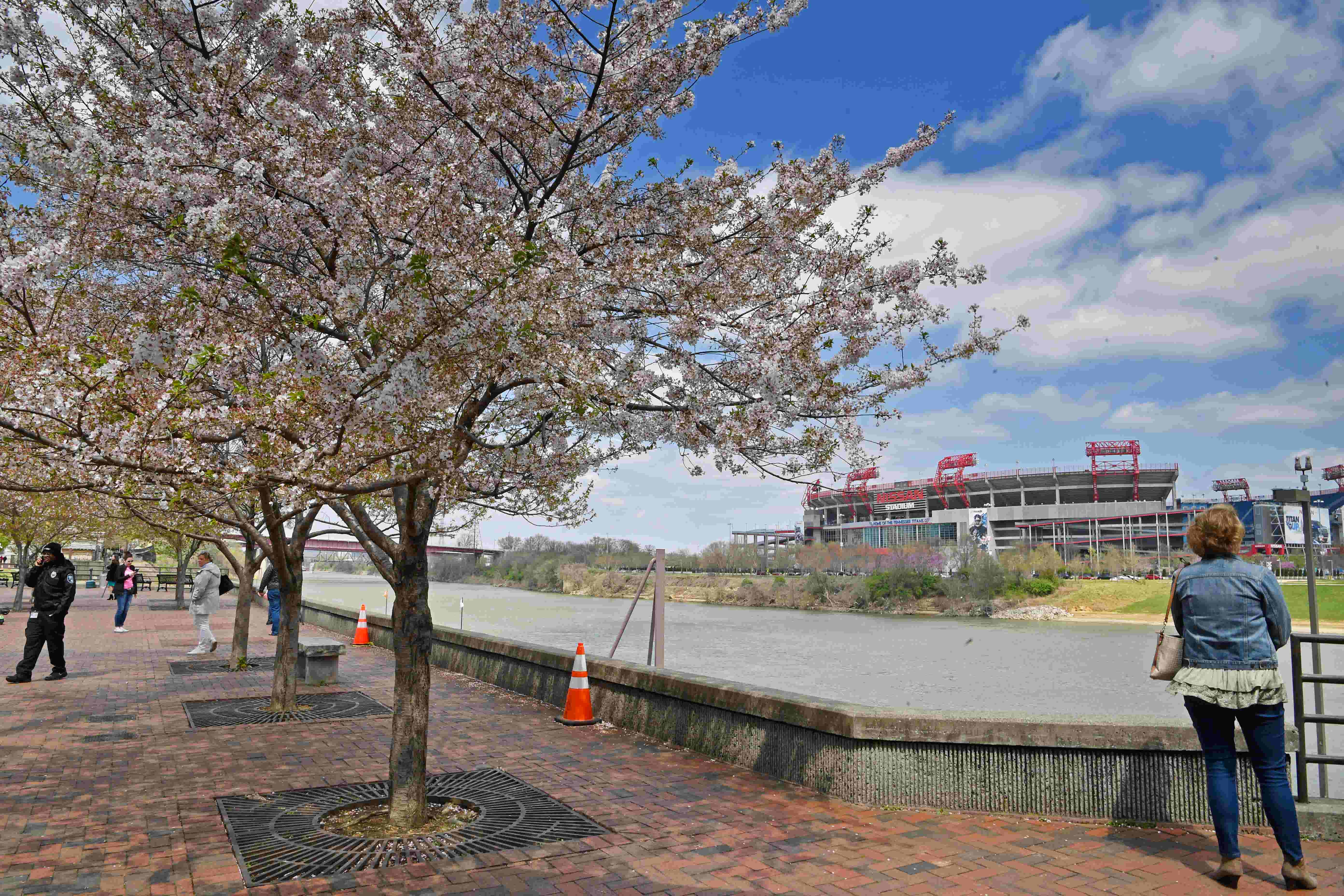Nashville government needs to make tree protections more transparent   Opinion