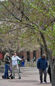 Ten cherry trees around the circle drive at Riverfront Park will be moved to accommodate the stage for the NFL Draft Sunday, March 31, 2019, in Nashville, Tenn.