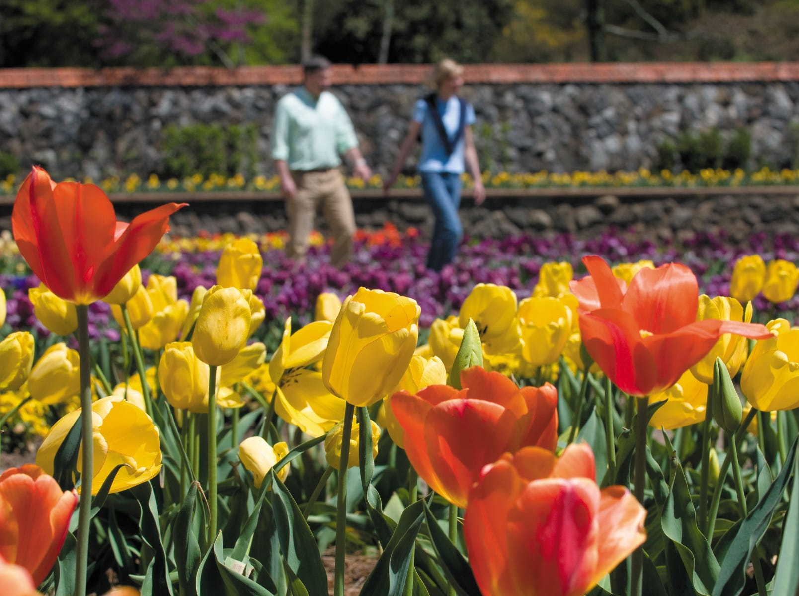Need help with your own garden? Biltmore Estate's experts are on hand on weekends.