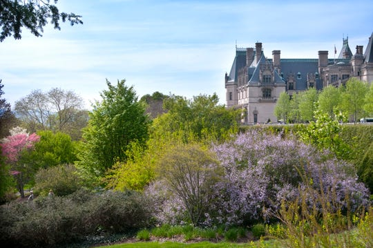 Biltmore Estate's Shrub Garden changes as shrubs and trees start to bloom.
