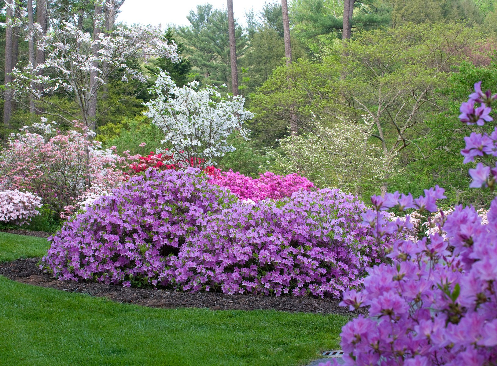 The azalea garden in full bloom at Biltmore is a riot of color.