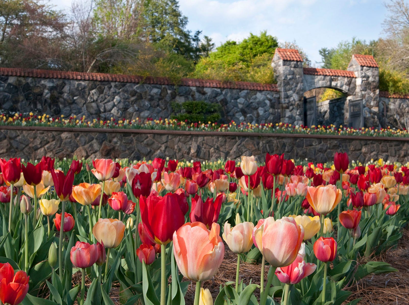 The Walled Garden is home to a grand display of tulips and other spring flowers. Find out what's blooming at the Biltmore's website.