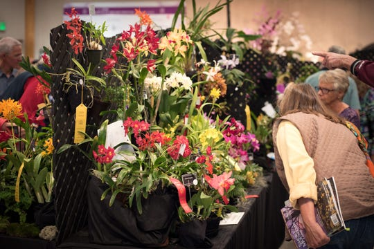The Asheville Orchid Festival takes place in NC Arboretum's Education Center, and features orchid displays and expert advice.