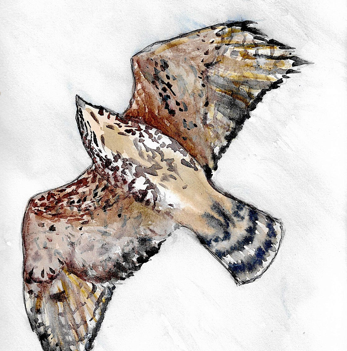 Nature Journal: Identifying soaring hawks