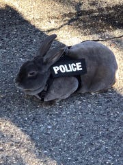 Thumper sports his custom police gear.