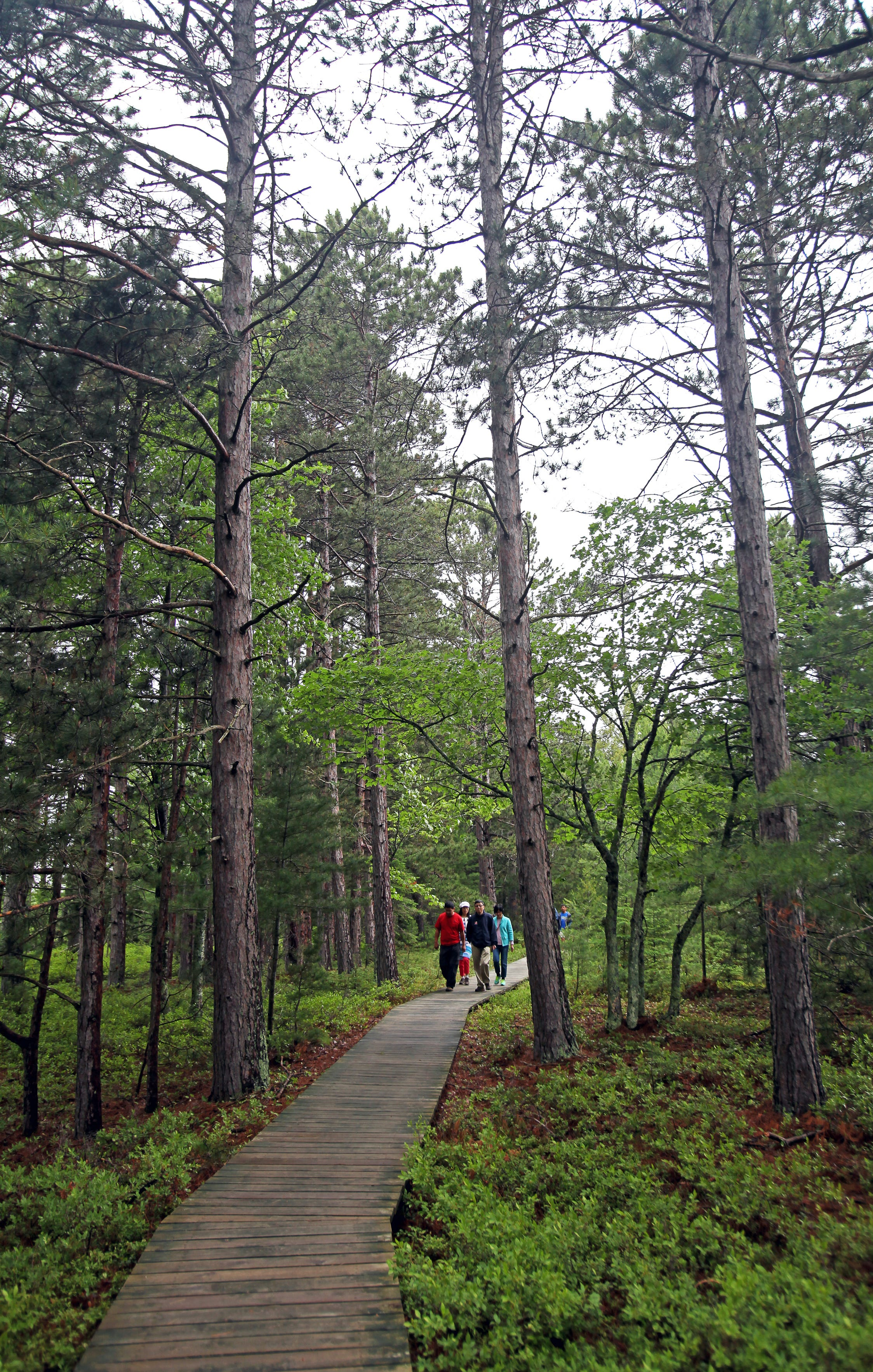 The Boardwalk Trail travels through forest and bog landscapes along Lake Superior at Big Bay State Park on Madeline Island.