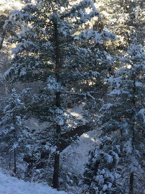 Christine DeBolt took this photo early in the morning as the sun was  peeking through the trees around 10 a.m. on April 1.