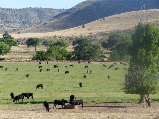 Cattle ranching continues in Hondo Valley of Lincoln County.