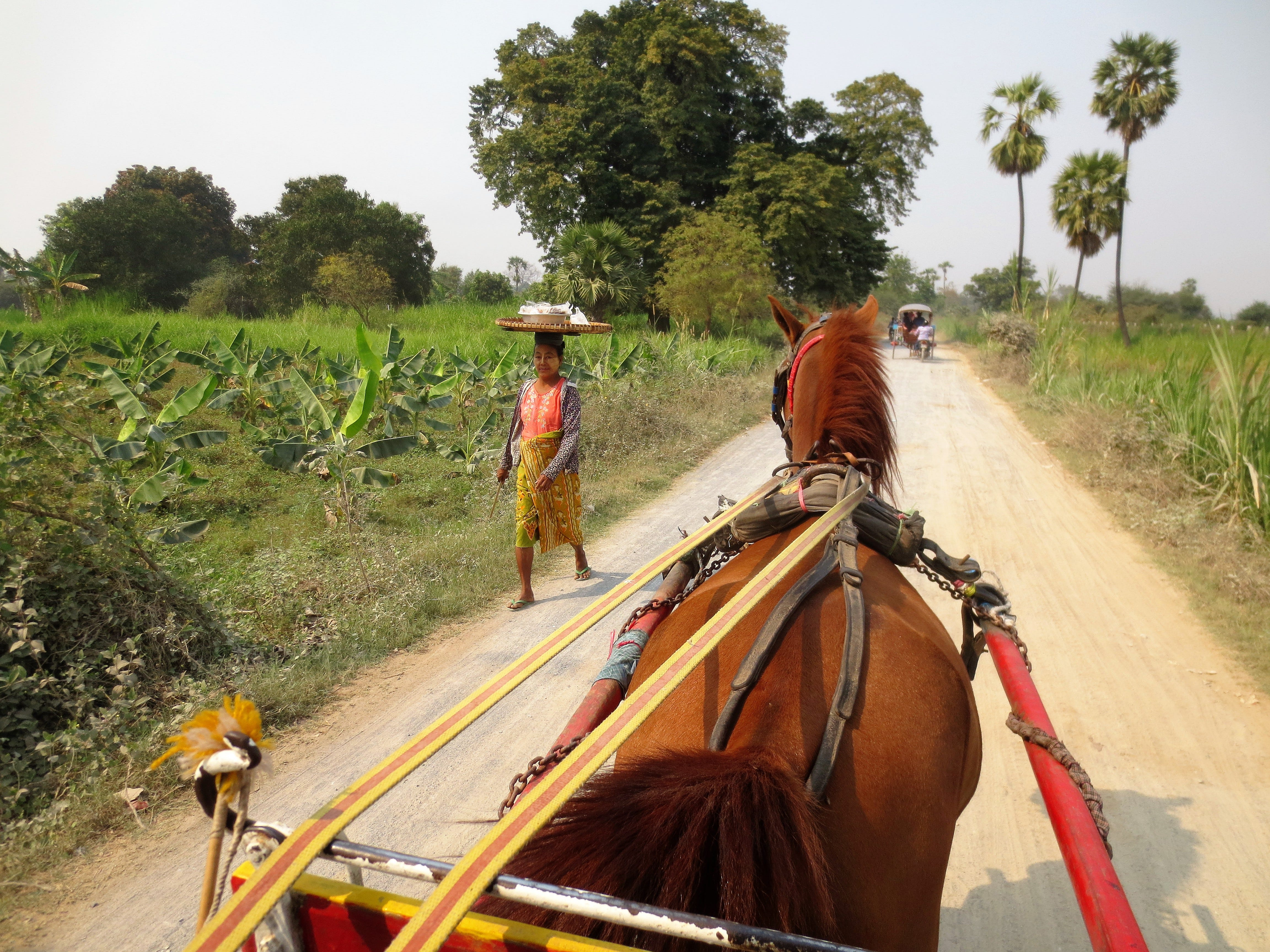 Riding in a horse cart through the Myanmar countryside.