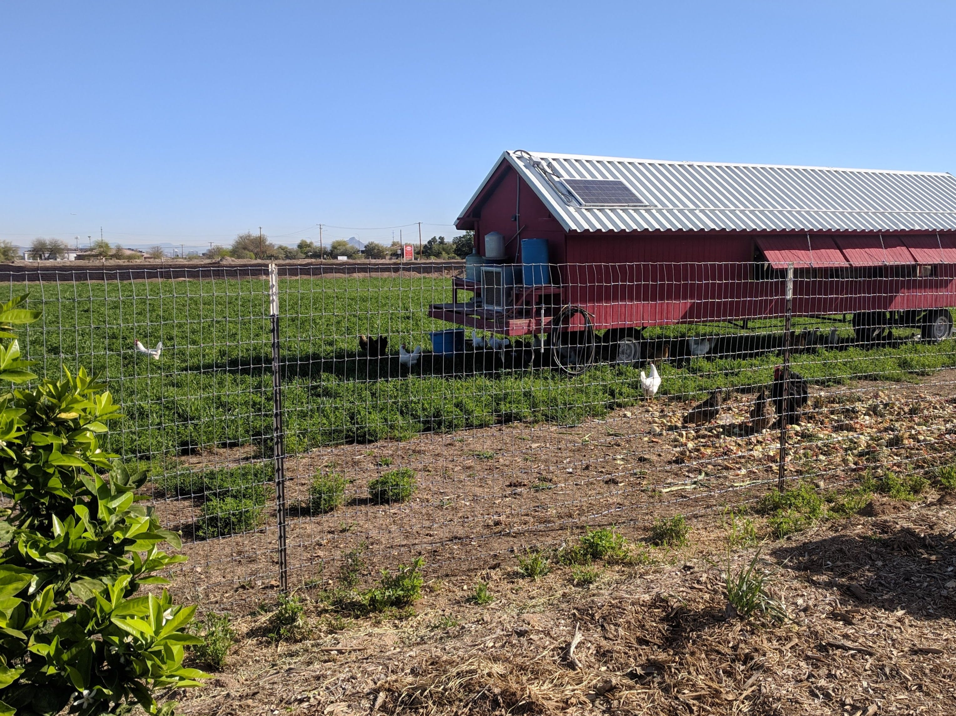 Chickens greet visitors who drive down the lengthy driveway at the Arizona Worm Farm.