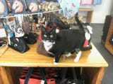 A new store on Chincoteague caters to cat and other animal lovers.