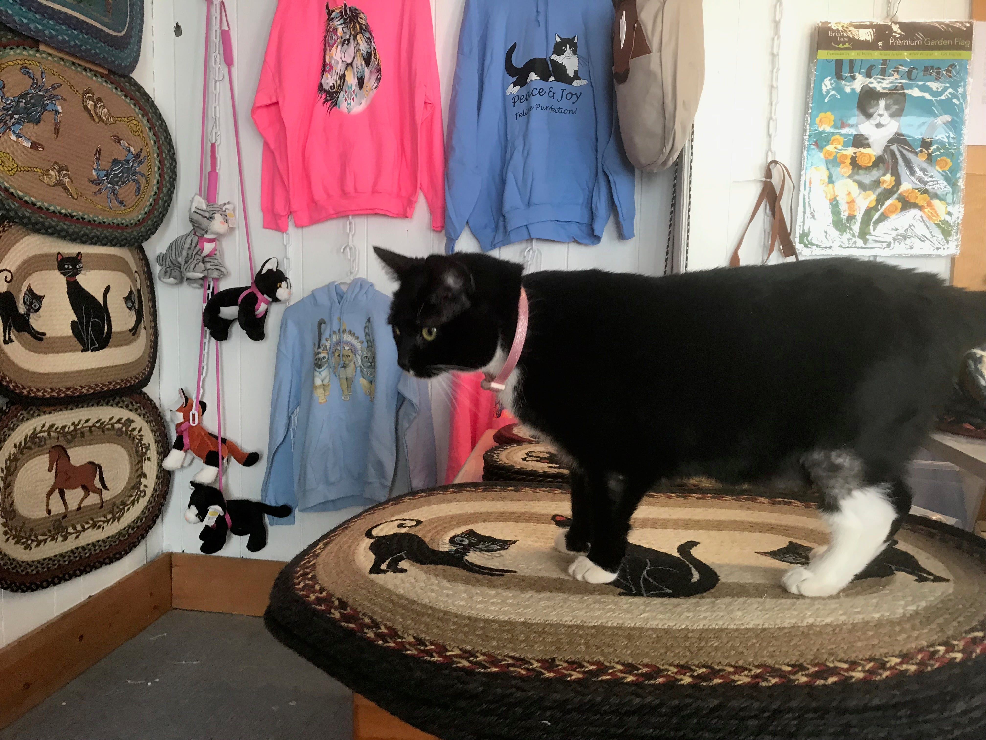 Pip the cat stands among items In A Cat's Eye, a new shop opening on Chincoteague, Virginia.