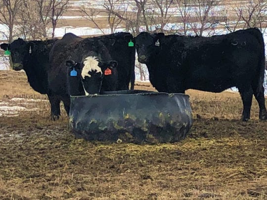 Cattle are part of the lifeblood of the Bar Bell Ranch run by Josh Geigle and his father on their property 15 miles north of Wall. Financial hurdles challenge the Geigles and other South Dakota ag producers.