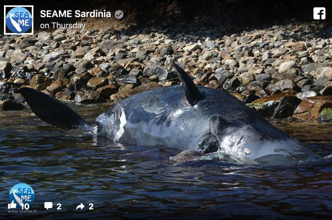 The nonprofit SEAME Sardinia published a photo of the sperm whale on Facebook.