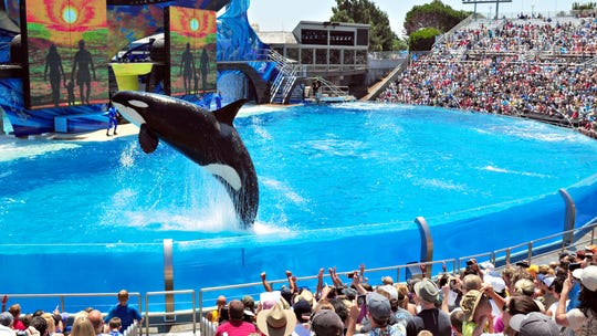 A nonprofit wants to explore creating a sanctuary where orcas living in captivity at theme parks could retire to.