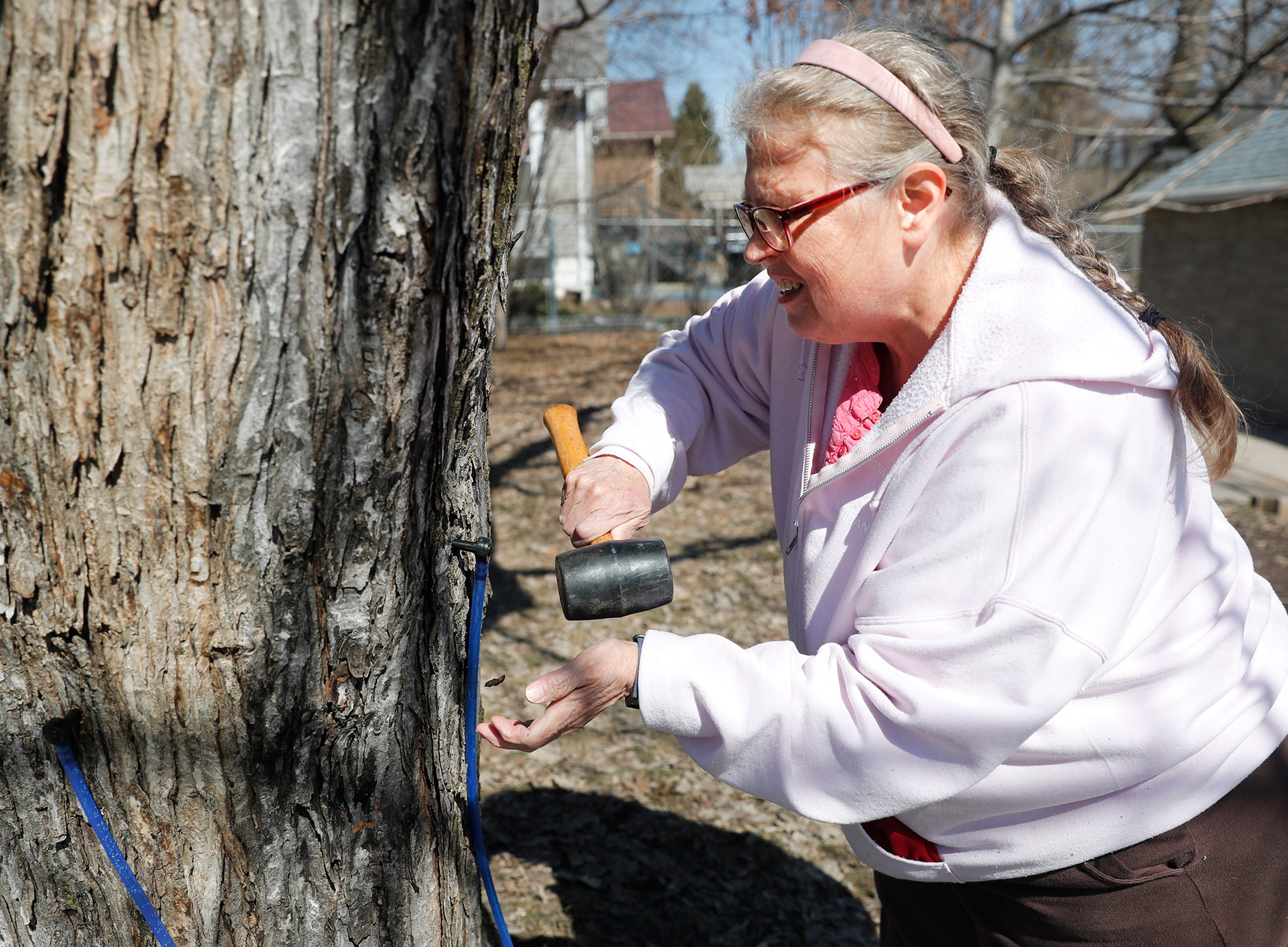 Paula Rothe, of Oshkosh, hammers in one of nine taps into three trees on her property for syrup with her husband Tuesday, March 26, 2019, in Oshkosh, Wis. Danny Damiani/USA TODAY NETWORK-Wisconsin